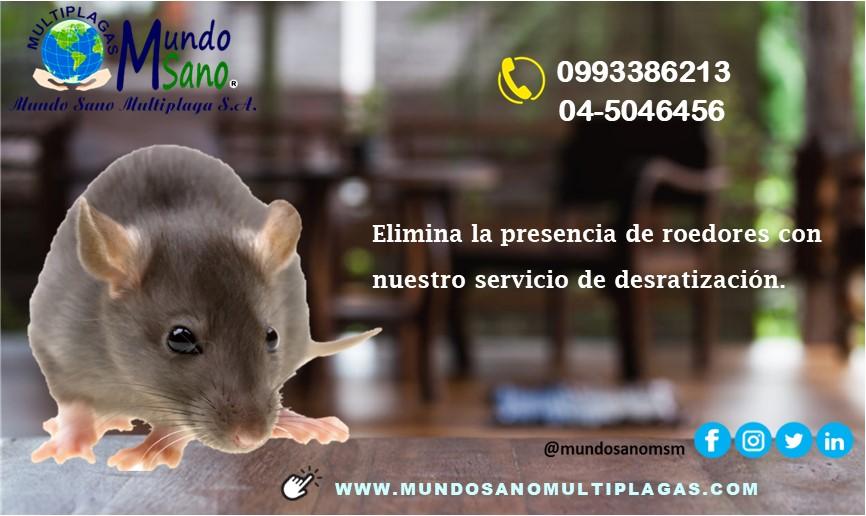 roedorpub